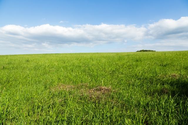 心地よい風が吹き抜けそうな草原。気持ちいい!