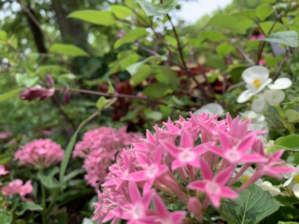 私が撮った花の写真。なんの花かはわかりませんが、可愛いお花です。