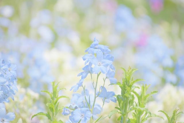綺麗なお花。名前はわからず。ブルーだ。