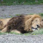 8月8日のライオンズゲートが!