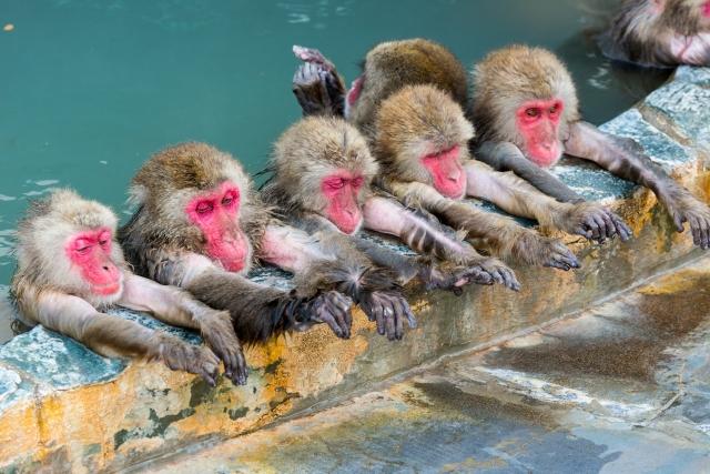 湯船に浸かるたくさんのお猿さん。気持ち良さそうで見てるだけで癒される。